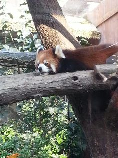This is how I feel today. #redpanda