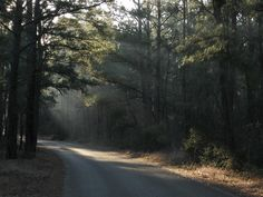 Early morning, Bastrop State Park, TX by Bike Hermit, via Flickr