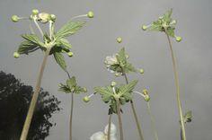 Photos surréalistes de fleurs en perspective - 2Tout2Rien