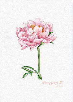 Pion Pion Pink Floral  Gardens Artist by Natalia Komisarova   NatalieStorePainting     You can also find me on:    EBAY: http://www.ebay.com/usr/natalie_komisarova.art    ETSY: https://www.etsy.com/shop/NatalieStorePainting    FACEBOOK: https://www.facebook.com/komisarova.art    #NataliePaintings #Natalie #Artist #Watercolor