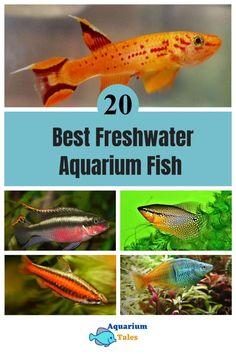 Freshwater Fish Tank, Tropical Freshwater Fish, Tropical Fish Aquarium, Home Aquarium, Aquarium Fish Tank, Angel Fish Tank, Community Fish Tank, Fish Information, Small Fish Tanks
