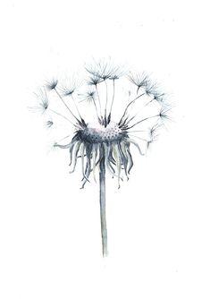 Dandelion Drawing, Dandelion Art, Botanical Art, Botanical Illustration, Handmade Home, Floral Artwork, Mountain Paintings, Watercolor Paintings, Watercolours