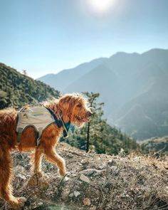 """CHASE 