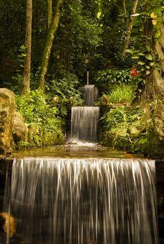 Jardim Botanico Rio De Jeneiro   Flickr - Compartilhamento de fotos!