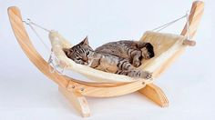 Designer Cat Hammock - Cats and Dogs House Pet Beds, Dog Bed, Cute Cats, Funny Cats, Grand Chat, Cat Hammock, Cat Playground, Cat Room, Pet Life