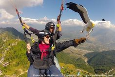 Best round the world trip for adrenaline junkies // Surf, snowboard, cage-dive with sharks and try this - paragliding with hawks (parahawking) - amazing! www.travelnation.co.uk/round-the-world-trip-for-adrenaline-junkies