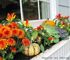 Colorful fall window boxes with mums, peppers, cabbage, and mini pumpkins
