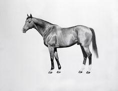 "JHB Gallery, New York on Instagram: ""Robert Davies, Dylan Thomas, 2009, pencil on paper, 150 x 190 cm #art #drawing #artonpaper #animal #horse #horses #racehorse #stud…"" Dylan Thomas, Horse Racing, Paper Art, New York, Racehorse, Horses, Gallery, Drawings, Pencil"