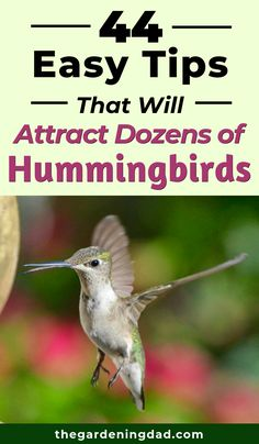 The Ultimate Guide to Attracting Hummingbirds! See more hummingbirds in your yard and garden with bird feeder ideas, DIY nectar, and native plant tips! Hummingbird Habitat, Hummingbird Migration, Hummingbird Flowers, Hummingbird Garden, Hummingbird Food, Attracting Hummingbirds, How To Attract Hummingbirds, How To Attract Birds, Homemade Hummingbird Nectar