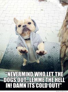 Caption Contest Winner!!! jacket-dog-meme facebook.com/weknowmemes