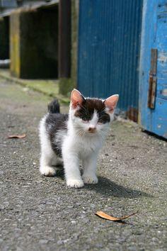 田代島の猫。 - * ねこにっき *