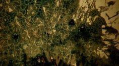 SALT LINES - Cade Bursell