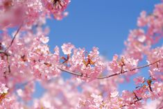 Spring Pictures, Fujifilm, Blossoms, F1, Cherry Blossom, Art Photography, Flora, Roses, Inspired