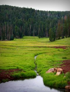 travelingcolors:  Becker Creek into the Pond, White Mountains | Arizona (by A. Burrows Photography)