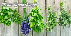 What are Strewing Herbs? - Gardening - A history and uses of strewing herbs, yesterday and today.the use of strewing herbs instead of commercial scents can give much the same pleasure to our noses without synthetic or simulated ingredients. Eco Deco, Healthy Herbs, Tea Benefits, Health Benefits, Insect Repellent, Medicinal Herbs, Aromatic Herbs, Tea Recipes, Drink Recipes