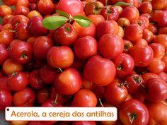 acerola - Cereja Antilhas