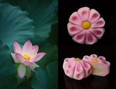 Kyoto photographer uncovers the inspiration behind Japan's most beautiful sweets   Spoon & Tamago