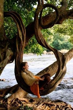 This is the perfect tree. It's good for sitting, reading, napping, photo op, etc. love this tree! Bonsai, Weird Trees, Unique Trees, Old Trees, Nature Tree, Tree Forest, Tree Art, Tree Of Life, Amazing Nature
