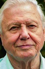 David Attenborough ( ) - an English Broadcaster and Naturalist - born on Saturday, May 1926 in Isleworth, London, England Personality Profile, David Attenborough, Portrait Photo, Historian, London England, Documentaries, Spiritual, Portraits, English