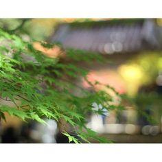 紅葉も、あっという間に過ぎ去れそうで。。。今週末はどこへ行こうかな。。。 It's likely to pass by like a flash this year.Where should we go on the weekend?  yoshiaki_katoh @yoshiaki_katoh Instagram photos   Webstagram