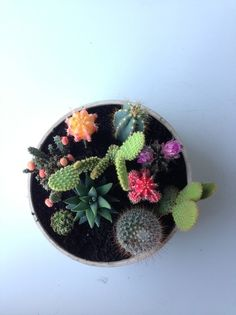 Cactus garden -- need one. Cacti And Succulents, Cactus Plants, Garden Plants, Cactus Pot, Colorful Plants, Indoor Garden, Indoor Plants, Outdoor Gardens, Do It Yourself Quotes
