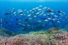 #Océanos están enfermos por el calentamiento global, dicen científicos - El Universo: El Universo Océanos están enfermos por el…