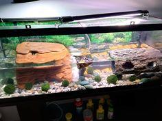 Aquatic Turtle Habitat, Aquatic Turtles, Map Turtle, Turtle Pond, Baby Mapping, Habitats, Gin, Home, Jeans