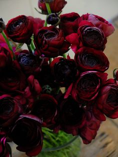 Japanese flowers...Yum ranunculus Black Jack