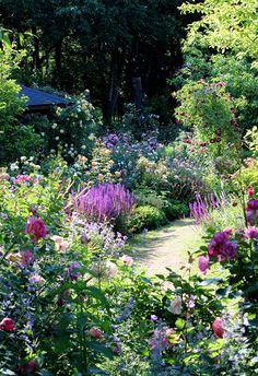 CoppiceGARDEN in early summer. Roses and perennials garden.-CoppiceGARDEN in early summer. Roses and perennials garden. CoppiceGARDEN in early summer. Roses and perennials garden. Plants, Backyard Garden, Cottage Garden Design, Flower Garden Design, Perennials, Cottage Garden Plants, Dream Garden, Garden Borders, Perennial Garden