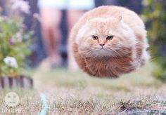 15 Perfectly Timed Hovering Cats 22 - https://www.facebook.com/different.solutions.page