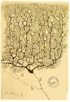 by Santiago Ramón y Cajal, ca. 1900