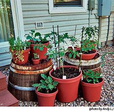 Container Gardening Posted on April 25, 2013 by High Mowing Organic Seeds