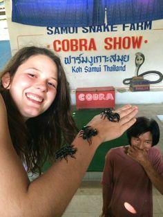 Scorpions at Koh Samui's snake farm