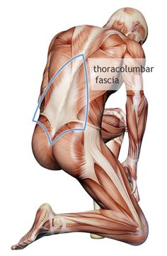 Understanding Your Fascia By Julia Lucas (June 10, 2011)                            Fascia may be the missing piece for your lingering injury. Under your skin, encasing your body and webbing its way through your insides like spider webs, is fascia.