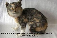 кирилл лукяш (@kirilllu20121)   Твиттер