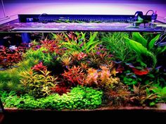 Planted Aquarium, Tropical Fish Aquarium, Small Fish Tanks, Cool Fish Tanks, Aquarium Landscape, Nature Aquarium, Aquascaping, Fish Tank Terrarium, Nano Cube