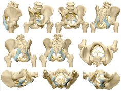 골반(pelvic bone)의 구조: 장골, 좌골, 치골 및 골반의 관절 : 네이버 블로그