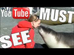 A seal falls in love with a woman on a sunny beach. They found trust in each other and this video shows that humans and animals are not so different. Truly amazing!