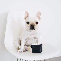 """P I G G Y & P O L L Y on Instagram: """"Real ladies cross their paws (and have a pawtty bag to carry their poop bags) Thanks to @chloetheminifrenchie for my first """""""