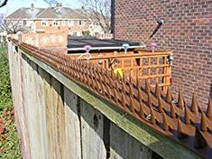 5 Young Tips: Fence Ideas Using Lattice Backyard Fence Options For Dogs.Backyard Fence Up Fencing Ideas Metal.Backyard Fence Options For Dogs. Front Yard Fence, Pool Fence, Backyard Fences, Fence Gate, Fenced In Yard, Backyard Play, Garden Fencing, Backyard Ideas, Pallet Fence
