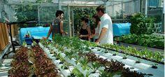 Design, build & finance rooftop gardens.