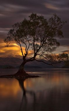 The Lone Tree of Lake Wanaka on New Zealand's South Island  • photo: Ingrid Kjelling on 500px