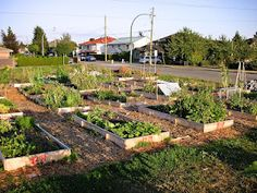 benefits of community gardens