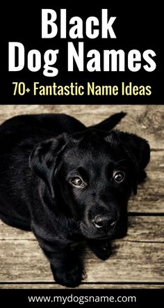 The ultimate list of black dog names. 70+ fabulous ideas that are perfect for a new pup. You MUST read this list!