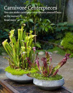 25 Best Carnivorous Plants Images Carnivorous Plants Interior