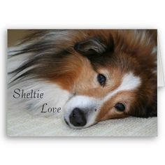 Sheltie Love Greeting Card...so sweet  $2.50 each for note card size