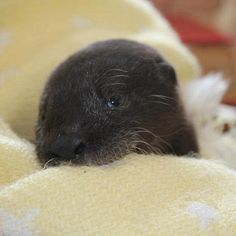 This is why baby otters are my favorite animals, just look at that...