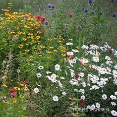 Stratton Mountain Wildflowers #wildflowers #strattonmountain #vermont #vermontbyvermonters #802 #visitstratton #hiking #hikingadventures #hikingday #outdoors #outdooryoga #sunnyday