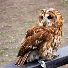 Cute owl :D