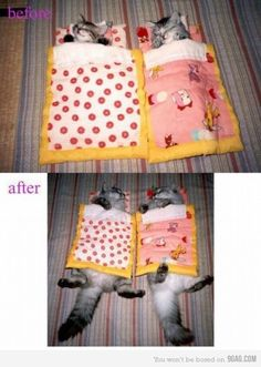 The left picture looks like a Nyan cat in the afterimage Baby Animals, Funny Animals, Cute Animals, Sleepy Animals, Crazy Cat Lady, Crazy Cats, I Love Cats, Cute Cats, Funny Kitties